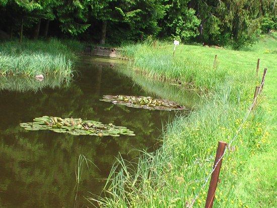 Un Etang près de La Beuille (88)