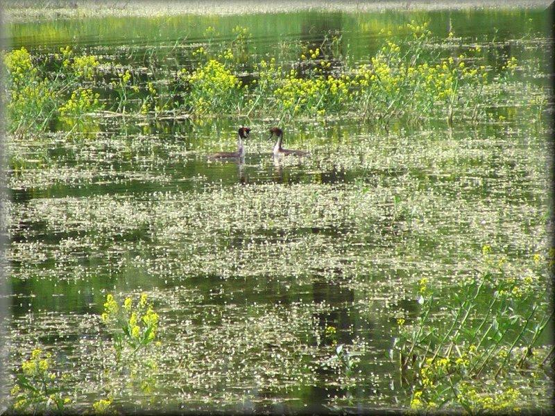 La Végétation Aquatique du Réservoir de la Liez et ses Hôtes
