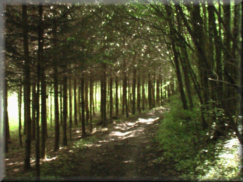 Le Sentier dans le Vallée de la Mouche