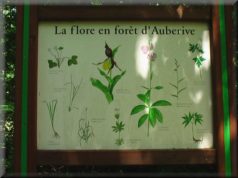 La Flore en Forêt d'Auberive