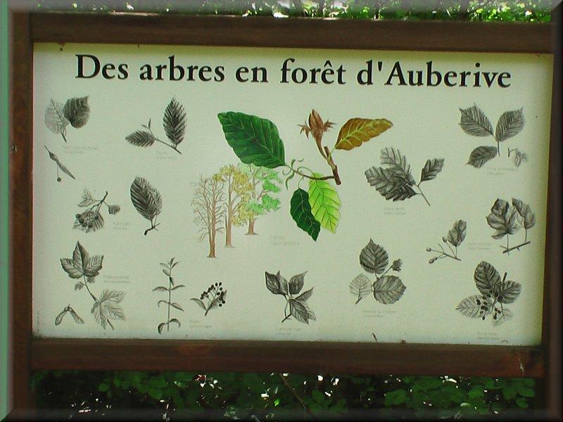 Les Arbres en Forêt d'Auberive