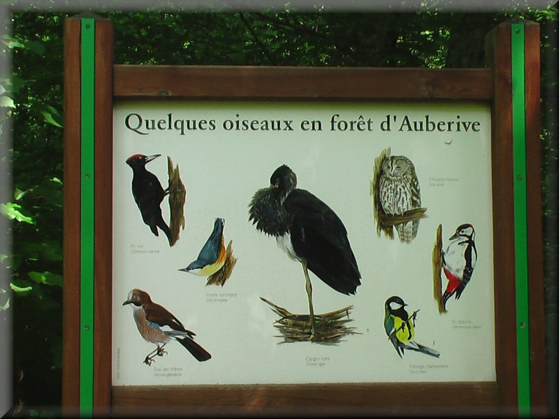 Les Oiseaux en Forêt d'Auberive