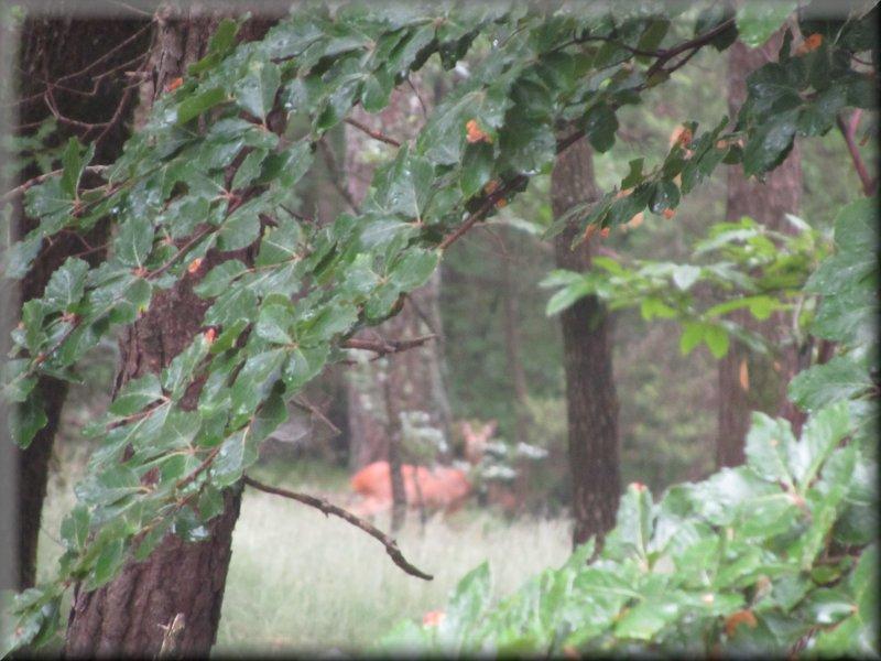 Un Chevreuil à l'Abri de la Forêt