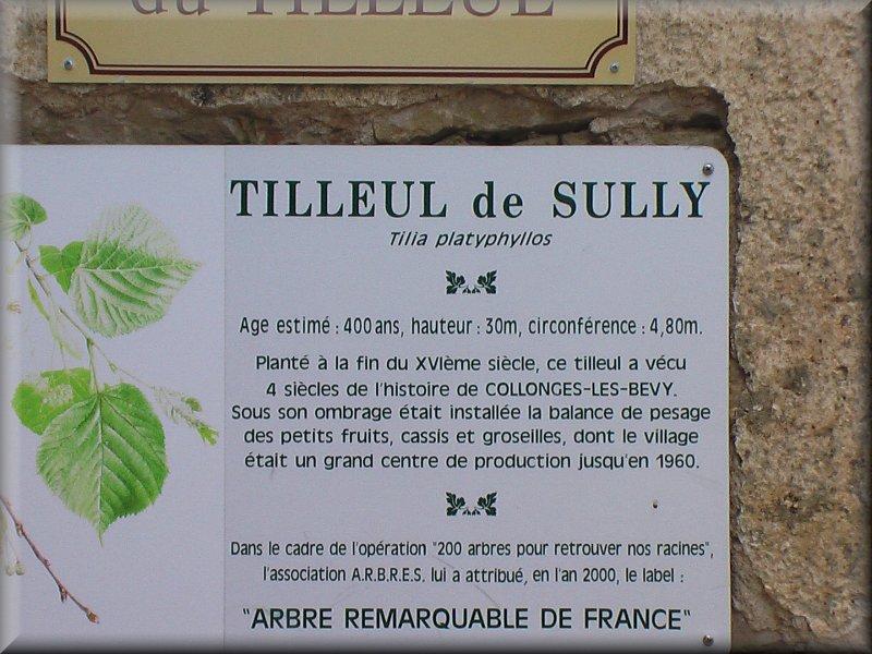 Le Tilleul de Sully
