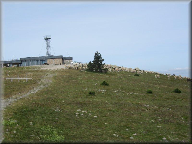 Il n'y a pas que des Touristes au Sommet du Mont Aigoual !