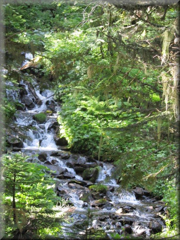 Le Ruisseau de la Barbouillère