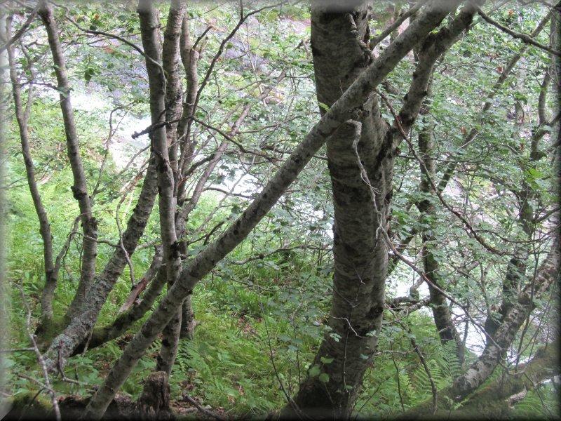 A Travers la Forêt Avant le Pas de Balussière