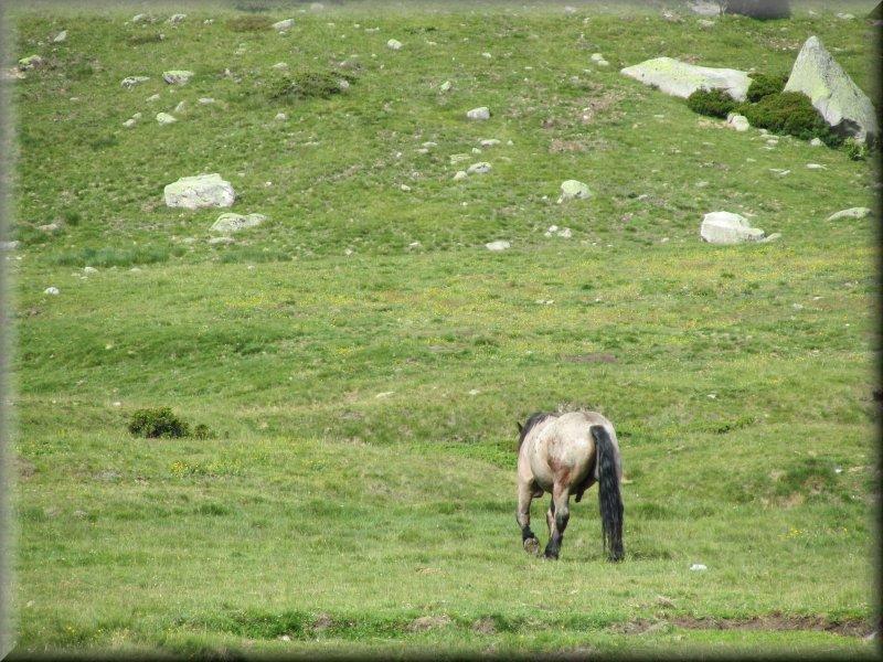 Cheval dans le Campcardos