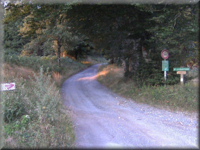 La Route Forestière vers La Gachal