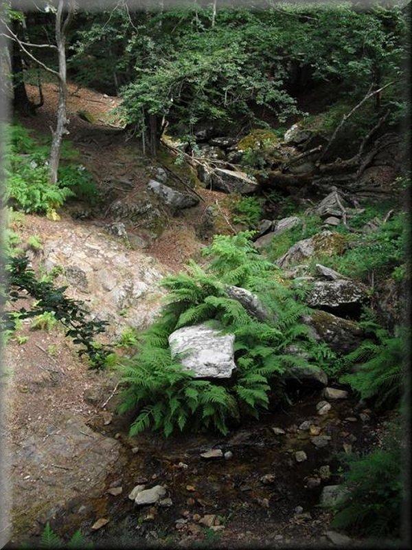 Ruisseau Avant la Montée à Montahut
