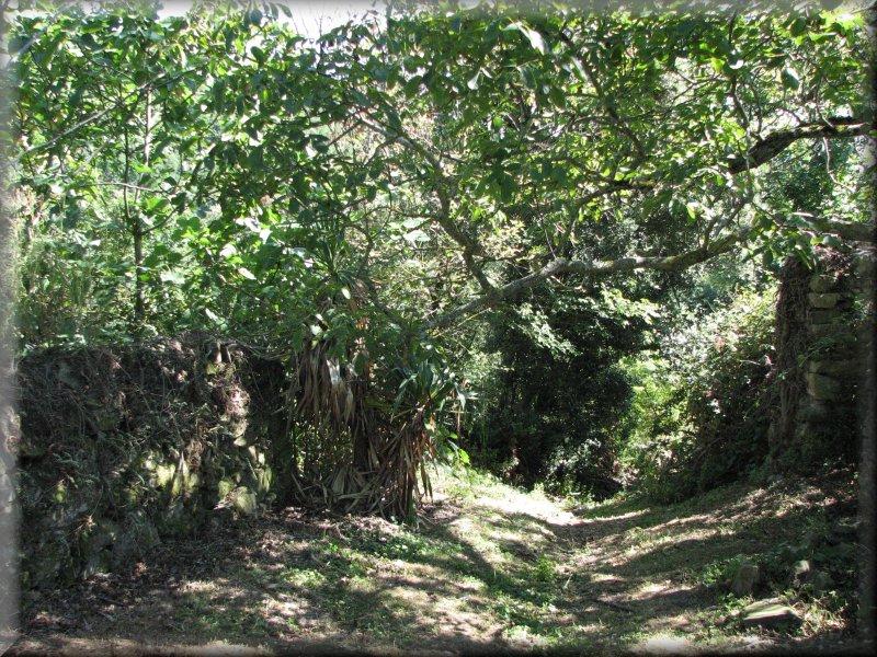 Le Sentier le Long du Ruisseau de Tenten