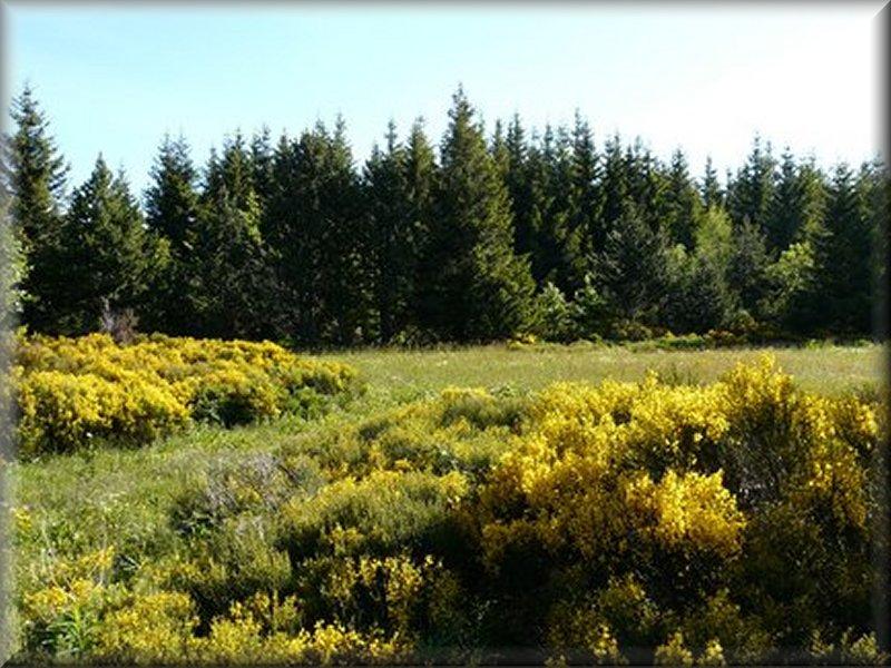 La Forêt de Mazan