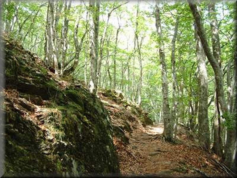 Le Sentier de l'Aigoual
