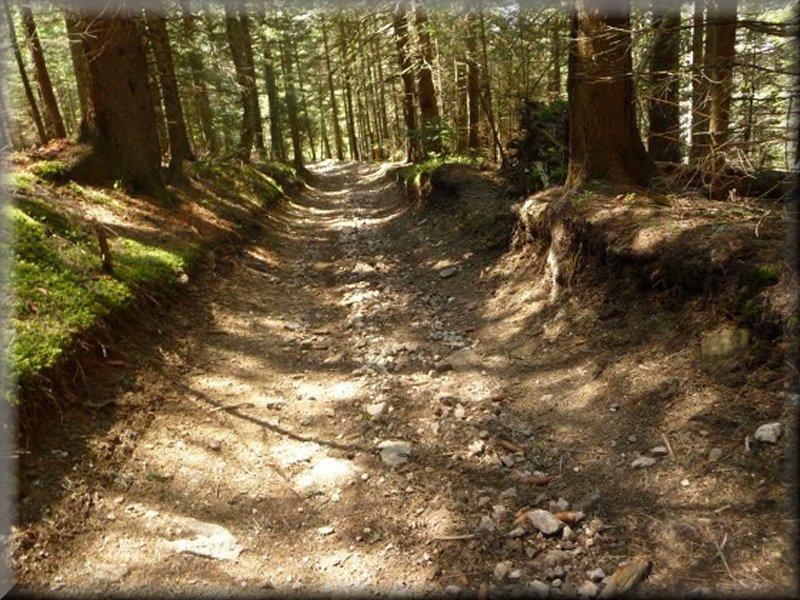 Le Sentier dans la Forêt de Taillard