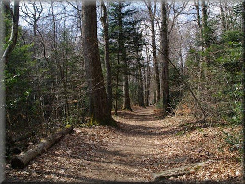 Le Sentier vers le Bassin du Lampy